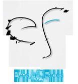 Cornea Oculo Plastic Surgery